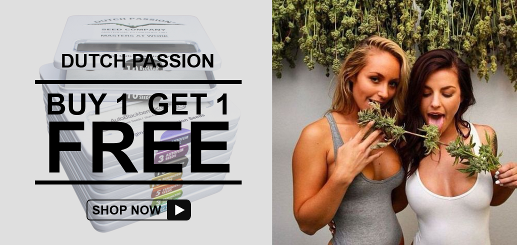Buy 1 Get 1 FREE - Dutch Passion - Discount Cannabis Seeds