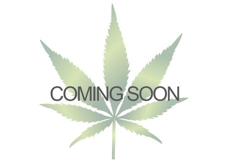 New Merchandise at Cannabis Seeds Store