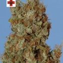 Afghani Kush Feminised Cannabis Seeds | Next Generation Seeds