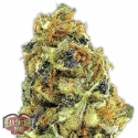 K.O. Kush Feminised Cannabis Seeds   Heavyweight Seeds