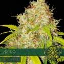 AK 49 Auto Feminised Cannabis Seeds   Vision Seeds