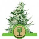Royal Critical Auto Feminised Cannabis Seeds | Royal Queen Seeds