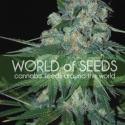 Ketama Feminised Cannabis Seeds | World of Seeds