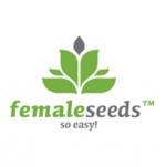 Female Seeds Feminised Cannabis Seeds   Cannabis Seeds Store