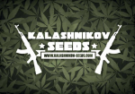 Kalashnikov Seeds   Cannabis Seeds Store