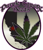 Purple Caper Seeds | Cannabis Seeds Store