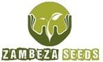 Zambeza Seeds   Cannabis Seeds Store