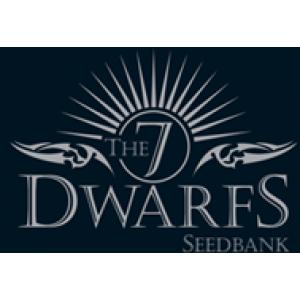7 Dwarfs Feminised Cannabis Seeds | Cannabis Seeds Store