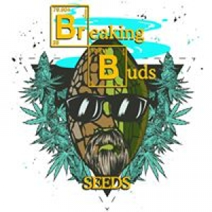 Breaking Buds Feminised Cannabis Seeds | Cannabis Seeds Store