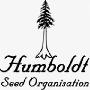 Humboldt Seeds Organisation Seeds |  Cannabis Seeds Store