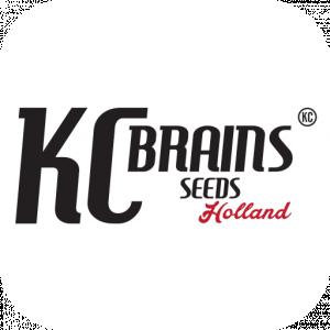 KC Brains Seeds | Cannabis Seeds Store
