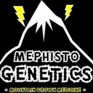 Mephisto Genetics Autoflowering Feminised Cannabis Seeds | Cannabis Seeds Store