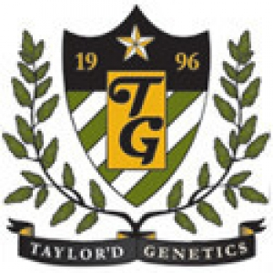 Taylor'd Genetics Seeds | Cannabis Seeds Store