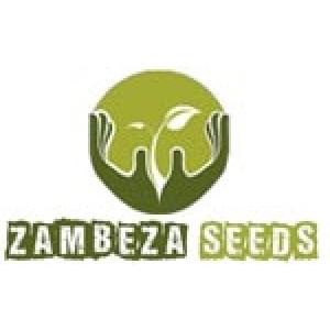 Zambeza Seeds | Cannabis Seeds Store