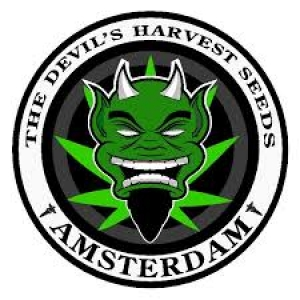 Devil's Harvest Cannabis Seeds | Cannabis Seeds Store