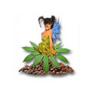 Sativa Seedbank | Cannabis Seeds Store