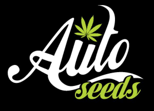 Auto Seeds Autoflowering Feminised Cannabis Seeds | Cannabis Seeds Store