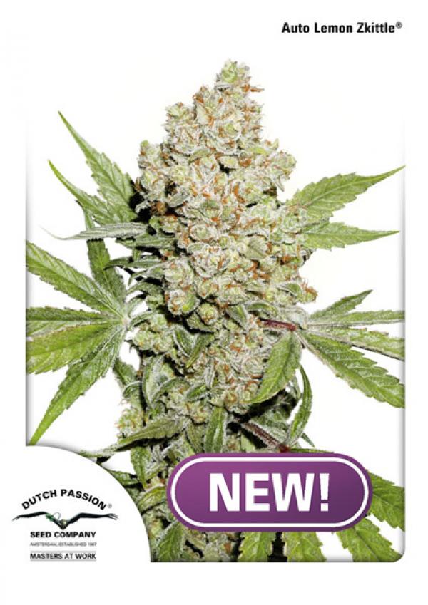 Auto Lemon Zkittle Feminised Cannabis Seeds   Dutch Passion