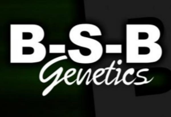 BSB Genetics - Cannabis Seeds Store