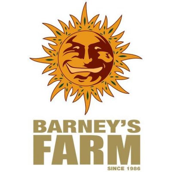 Barney's Farm Cannabis Seeds | Cannabis Seeds Store