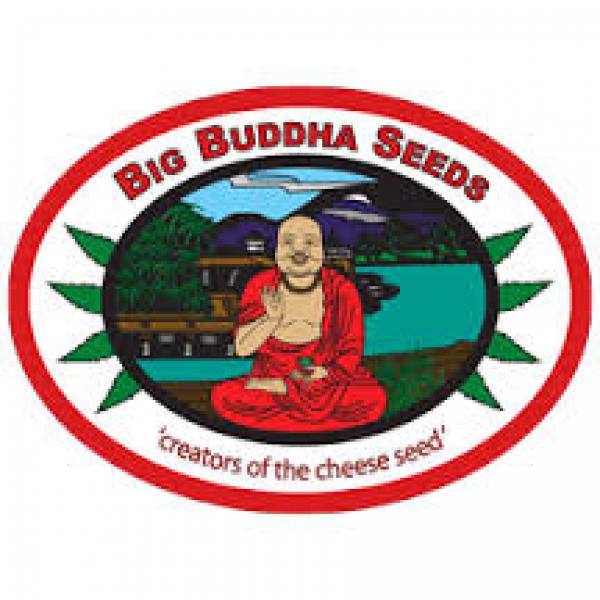 Big Buddha Cannabis Seeds | Cannabis Seeds Store