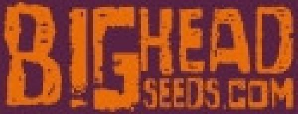 Big Head Seeds | Cannabis Seeds Store