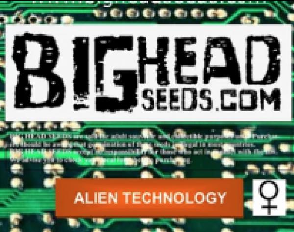 Alien Technology Feminised Cannabis Seeds | Big Head Seed