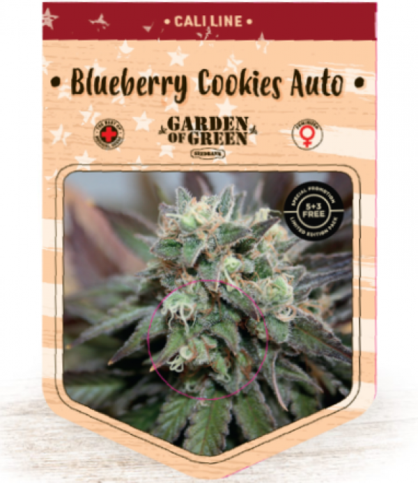 Blueberry Cookies Auto Feminised Cannabis Seeds   Garden of Green