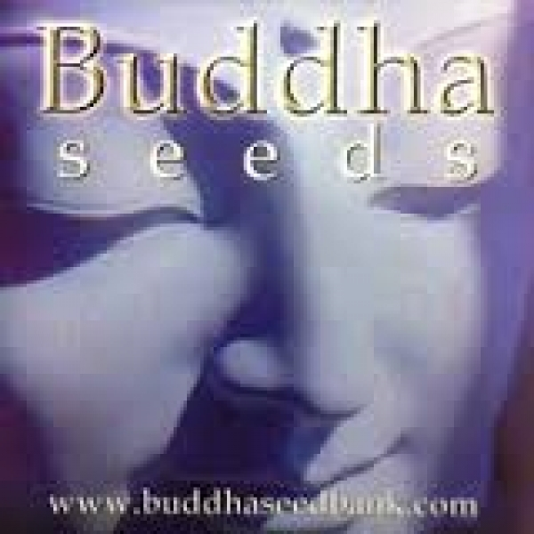 Buddha Cannabis Seeds | Cannabis Seeds Store