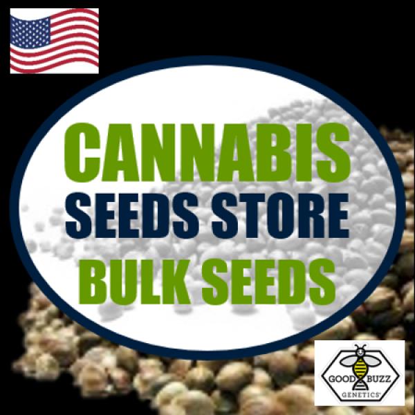 Chemdawg Feminised Cannabis Seeds   Good Buzz Genetics