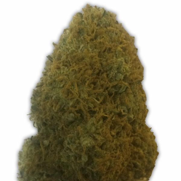 The Champion Feminised Cannabis Seeds