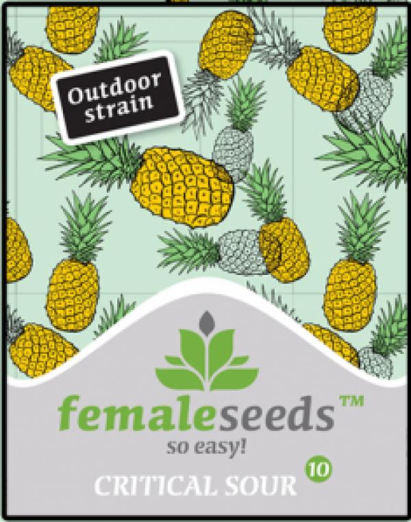Critical Sour Feminised Cannabis Seeds | Female Seeds