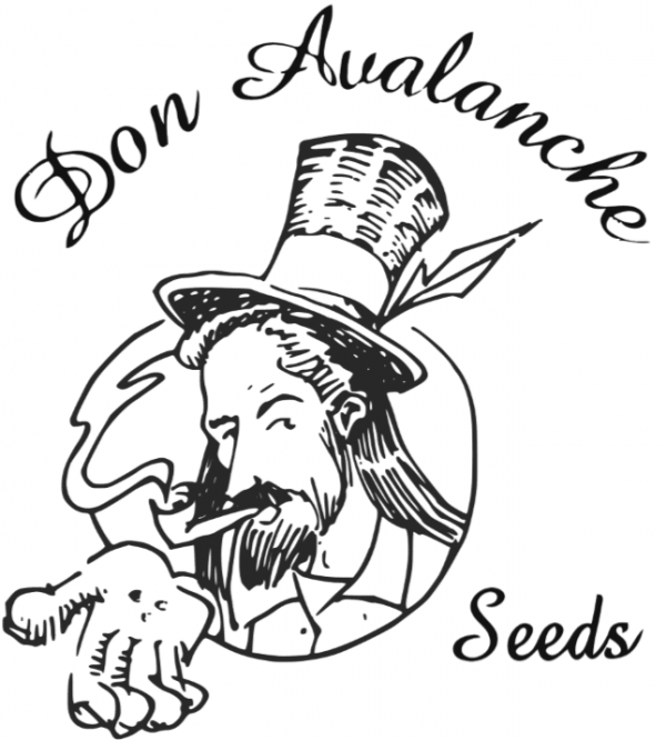 Don Avalanche Seeds from Discount Cannabis Seeds