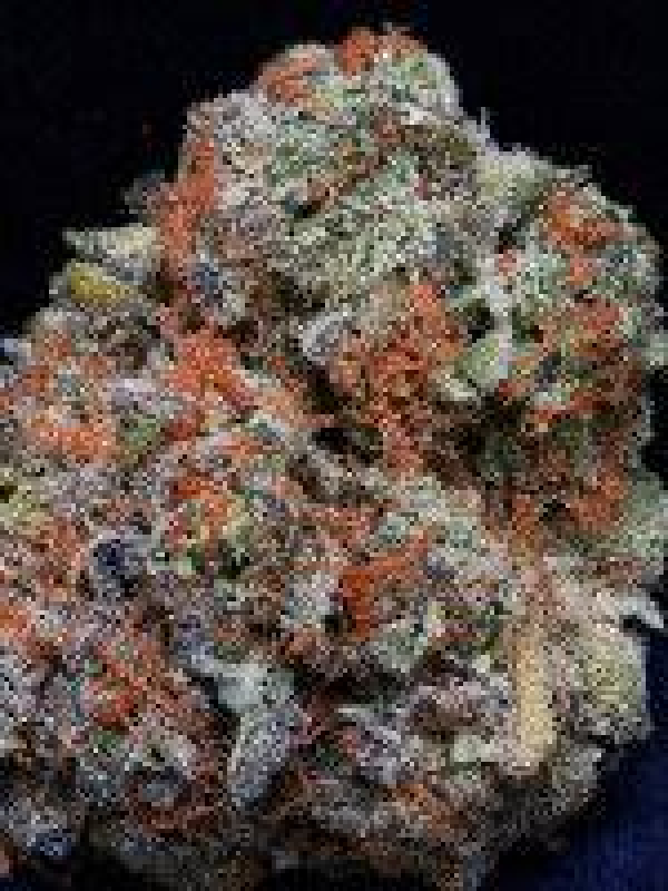 Don Girl Scout Cookies Feminised Cannabis Seeds | Don Avalanche Seeds
