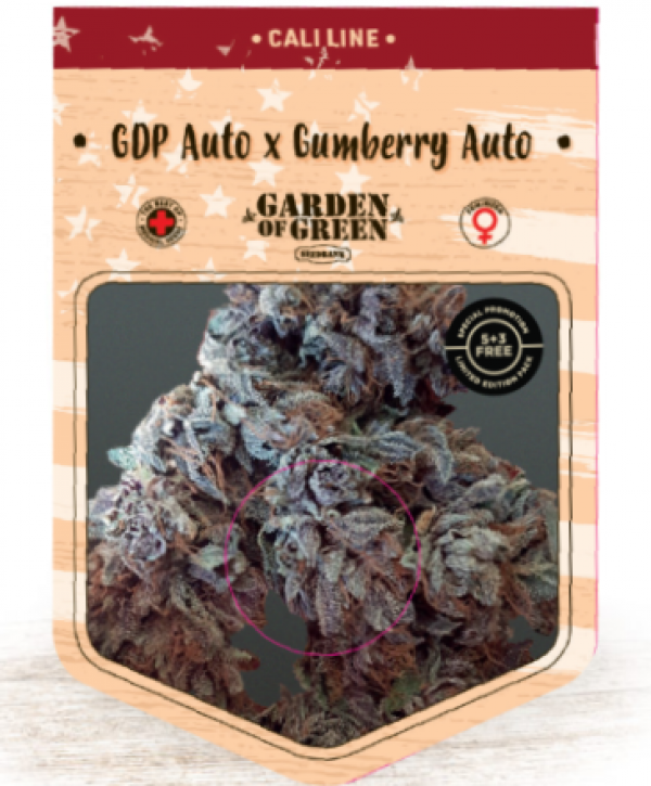 GDP Auto x Gumberry Auto Feminised Cannabis Seeds   Garden of Green