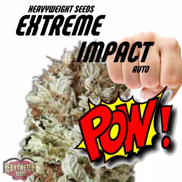 Extreme Impact Auto Feminised Cannabis Seeds | Heavyweight Seeds