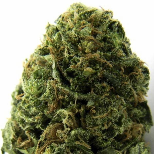 Massive Midget Auto Feminised Cannabis Seeds | Heavyweight Seeds