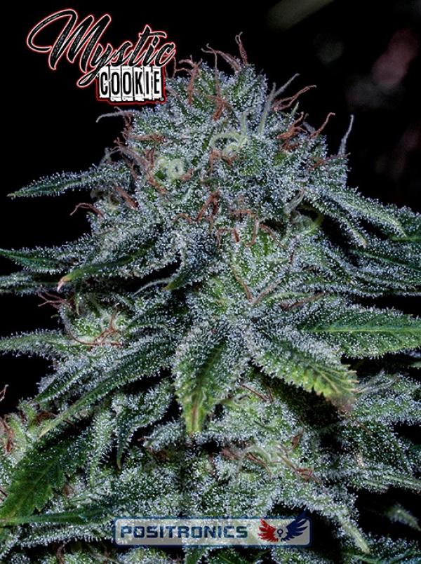 Mystic Cookie Feminised Cannabis Seeds   Positronics