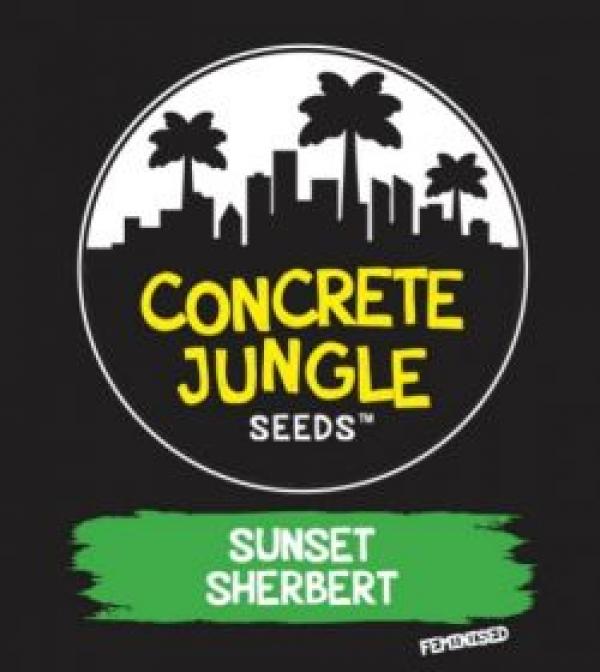 Sunset Sherbert Feminised Cannabis Seeds   Concrete Jungle Seeds