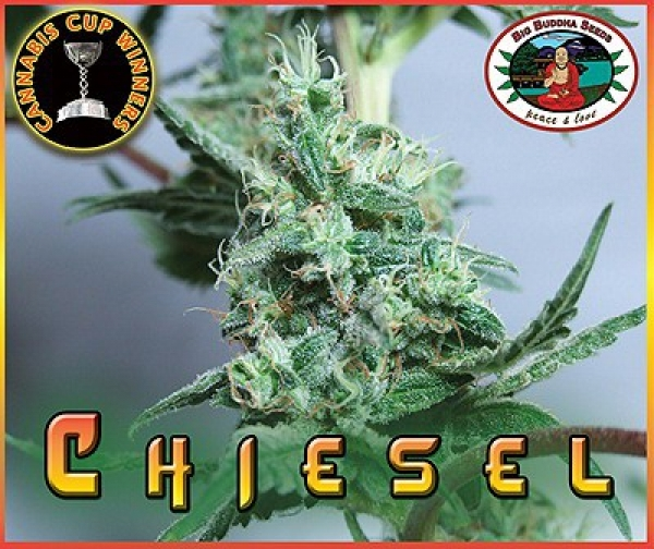 Big Buddha Seeds Chiesel Feminised Cannabis Seeds For Sale