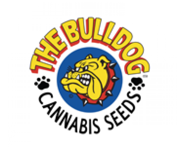 The Bulldog Seeds | Cannabis Seeds Store