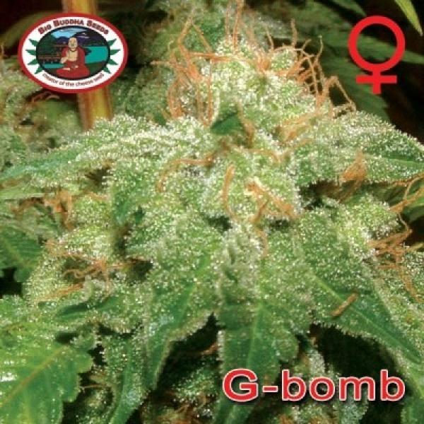 Big Buddha Seeds G Bomb Feminised Cannabis Seeds For Sale