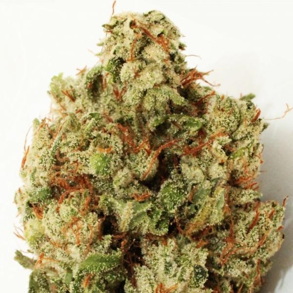 Green Ninja Feminised Cannabis Seeds | Heavyweight Seeds
