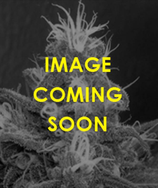 Cannaberry Regular Cannabis Seeds | Apothecary Genetics Seeds