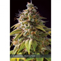 Caramel Monster Feminised Cannabis Seeds | Vision Seeds