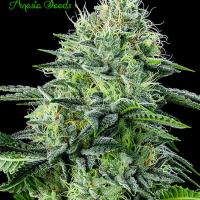 Auto Strawberry Banana Feminised Cannabis Seeds - Anesia Seeds