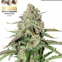Auto Ultimate Feminised Cannabis Seeds| Dutch Passion