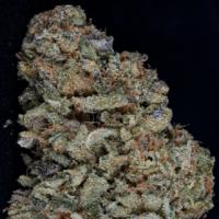 Gorilla Zkittlez Feminised Cannabis Seeds   Big Head Seeds