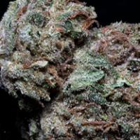 Skywalka Ghost Kush Feminised Cannabis Seeds | Big Head Seeds