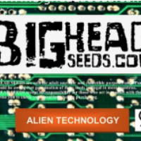 Alien Technology Feminised Cannabis Seeds | Big Head Seed